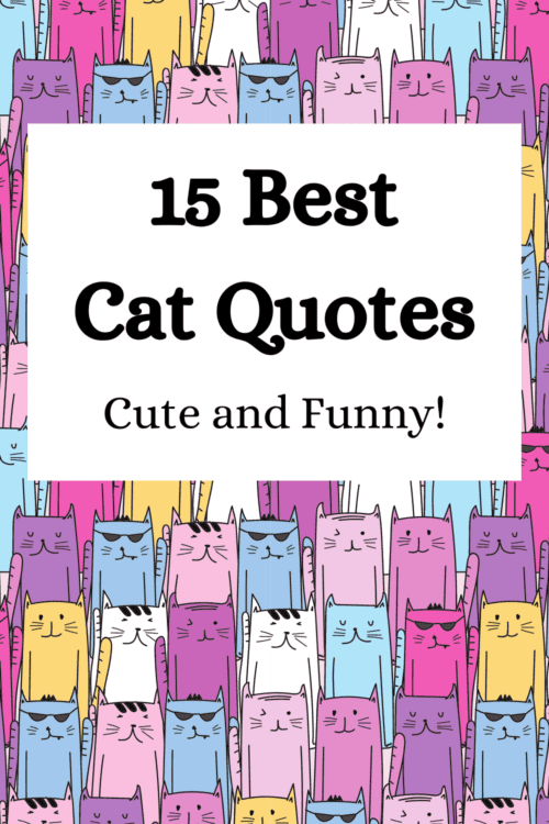 15 Short Cat Quotes {Cute and Funny for Cat Lovers!}